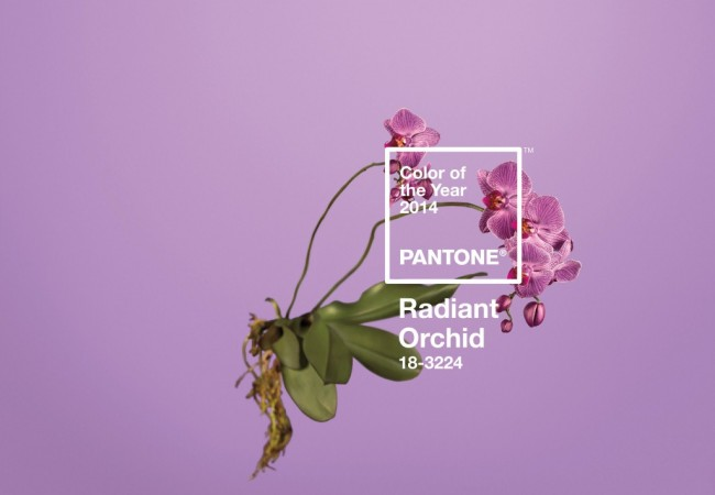 Colour Of The Year – Radiant Orchid