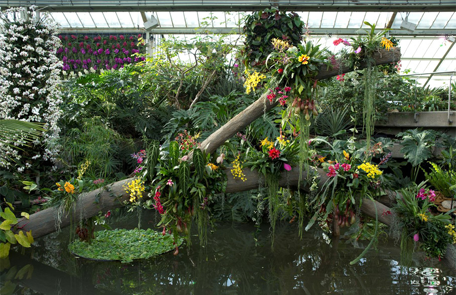 Orchids Garden Design Orchids Garden Design My New Orchid Garden Alluring  Front Gardens Designs How To