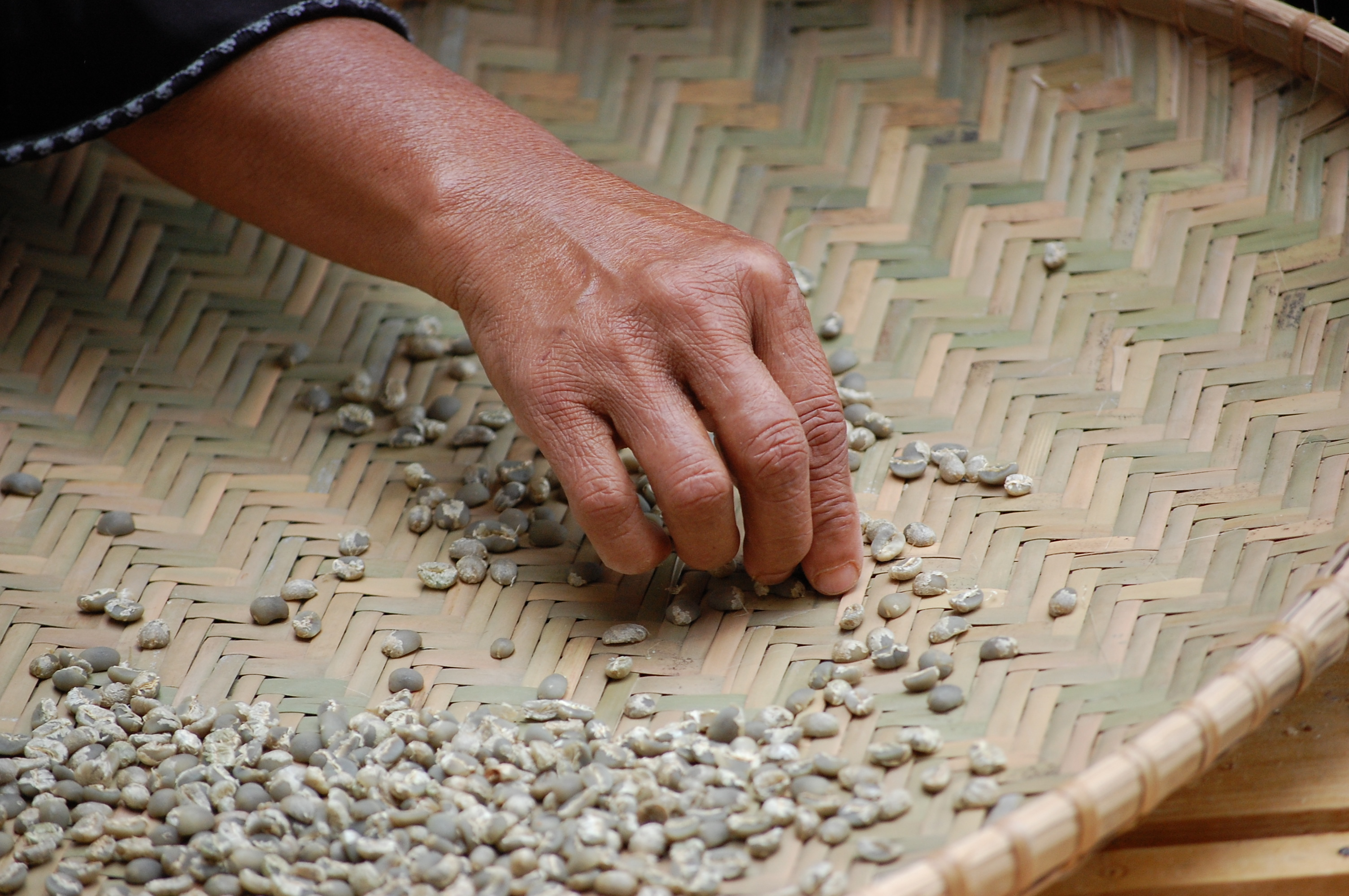 Hand sorting - Image courtesy of Matthew Ross