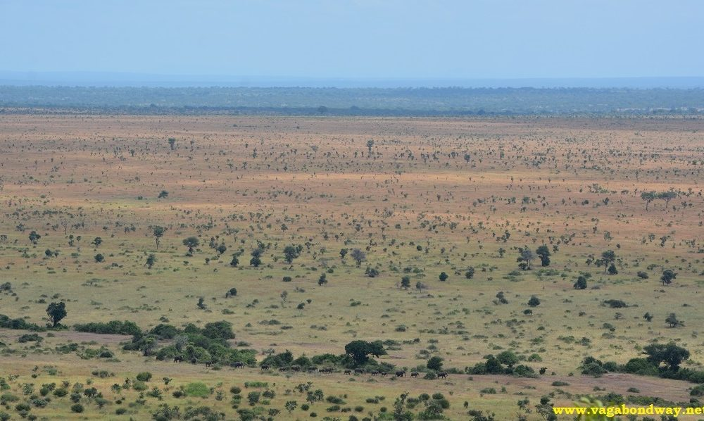 Vagabond Way - South African Elephant Herd