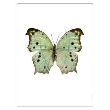 Butterfly Print - Salamis Parhassus Green