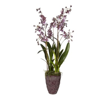 Potted Purple Dancing Orchid