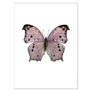 photo-de-papillon-salamis-parhassus-rose