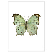 butterfly-print-salamis-parhassus-green