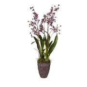 potted-purple-dancing-orchid-large