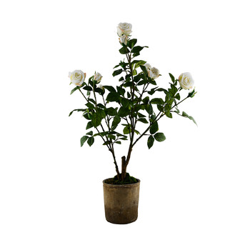 Potted Roses - White