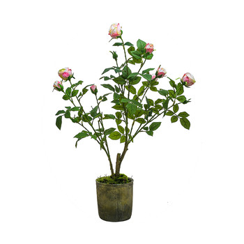 Potted Roses - Light Pink