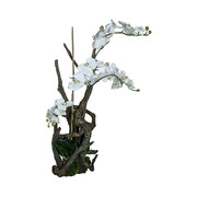 phalaenopsis-orchid-branches