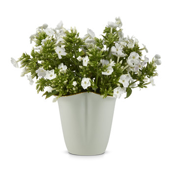 Bellamy Clover Vase - Small