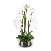 potted-phalaenopsis-orchid