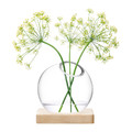 LSA International - Axis Vase & Ash Base - Clear - Small