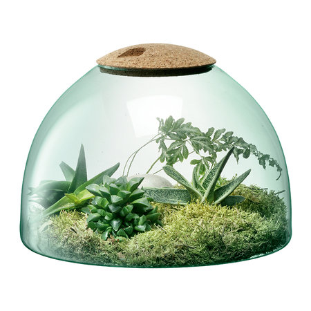 LSA International - Canopy Closed Garden - 22cm