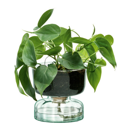 LSA International - Canopy Self Watering Planter - 13cm