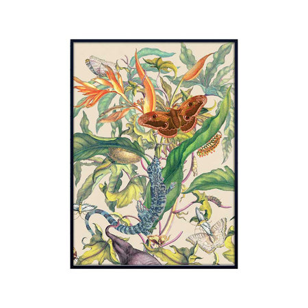 Vanilla Fly - Botanical Floral Butterfly Print - 70x100cm