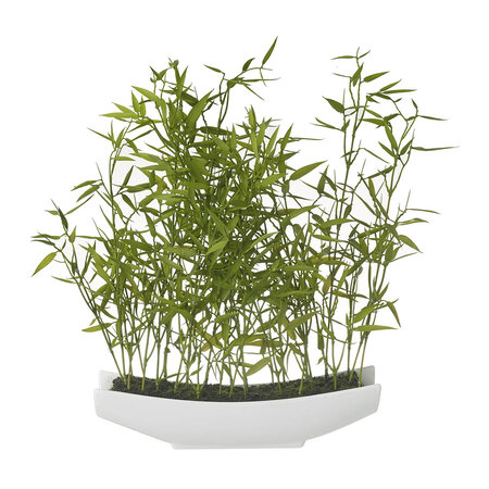 Parlane - Bamboo in Pot