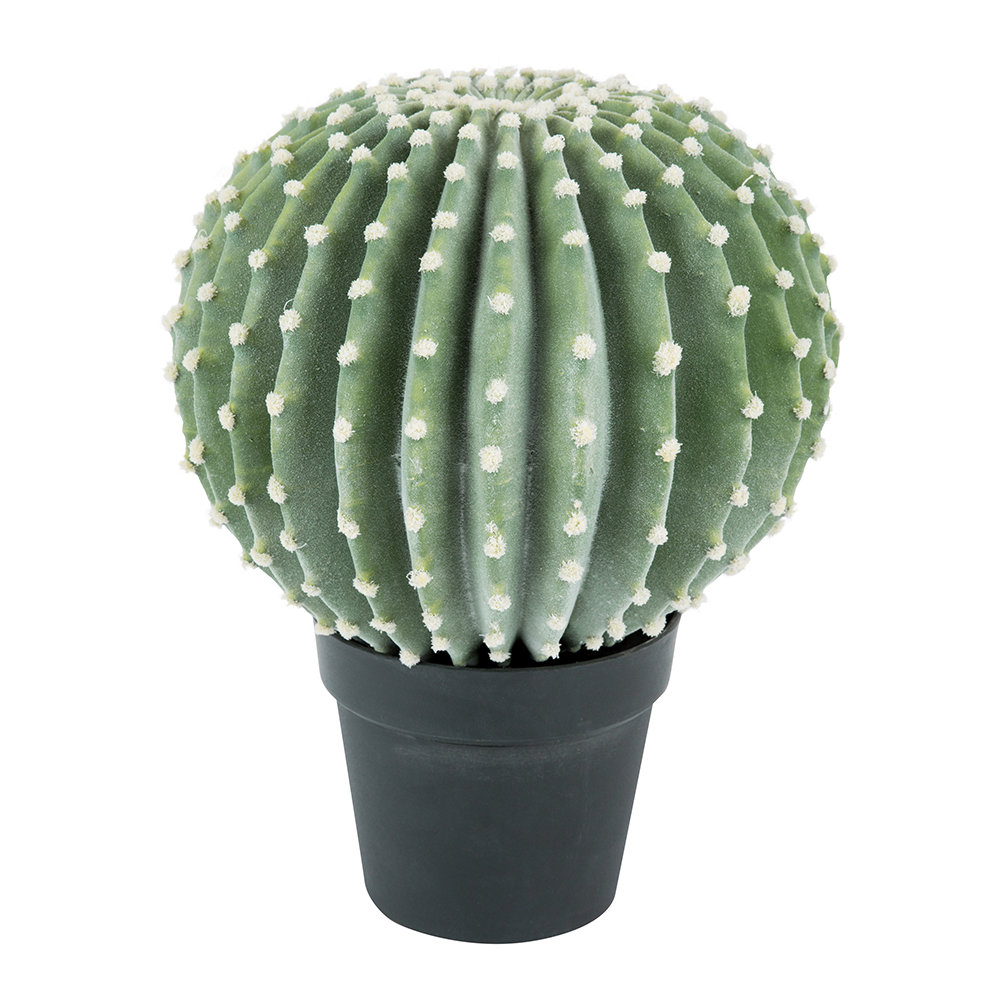 Parlane - Potted Melon Cactus - Large