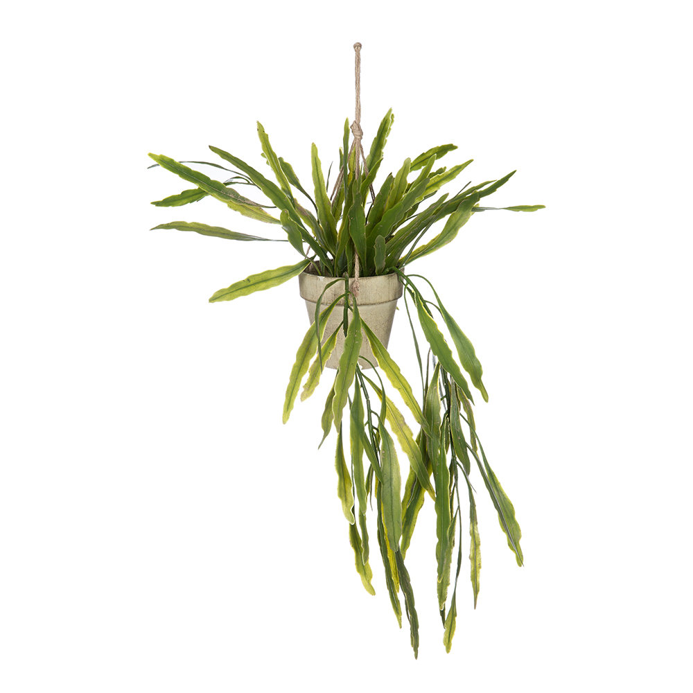 Parlane - Rhipsalis Hanging Pot - Green