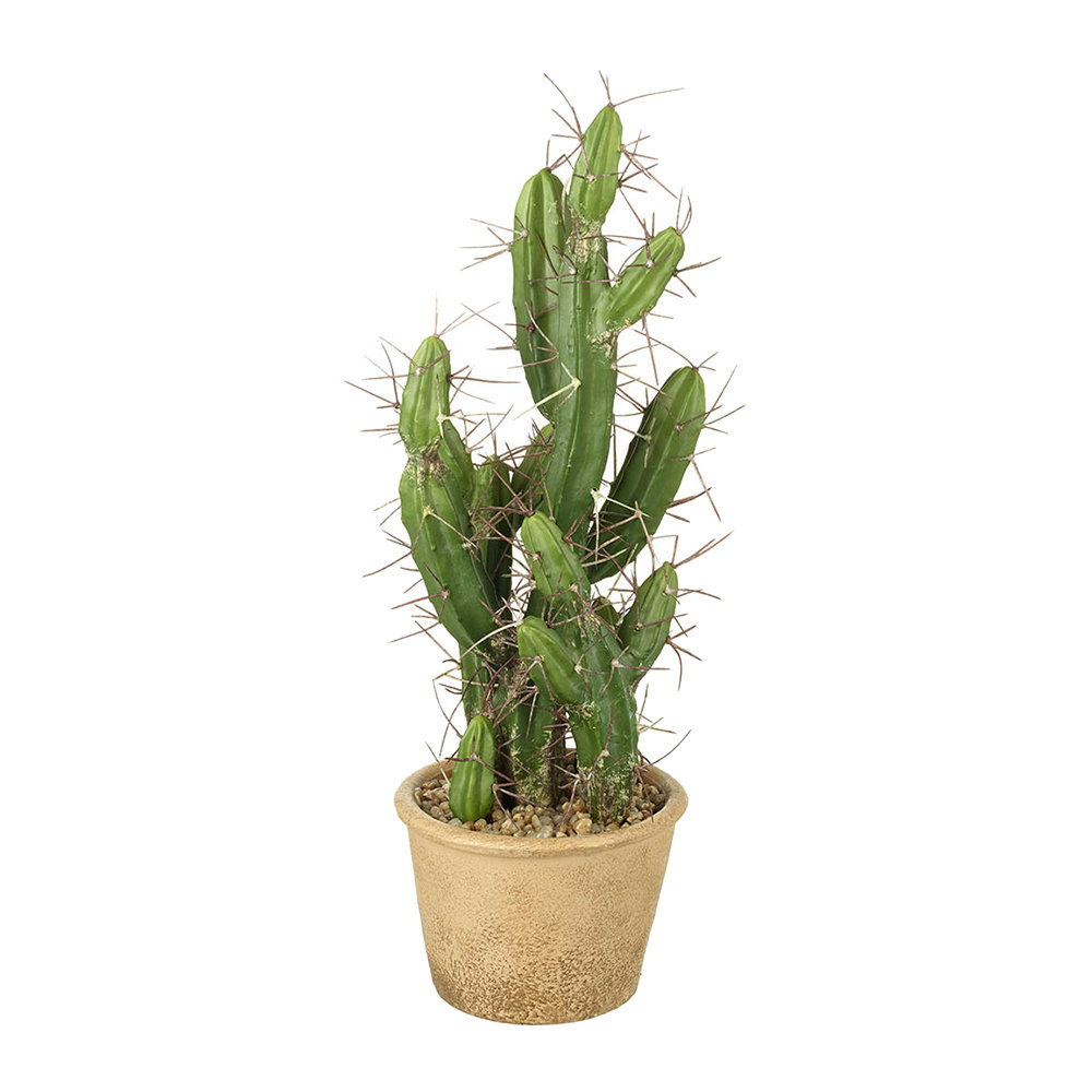 Parlane - Potted Desert Cactus - Extra Small