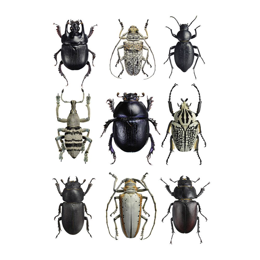Liljebergs - Beetles Print - Black & White