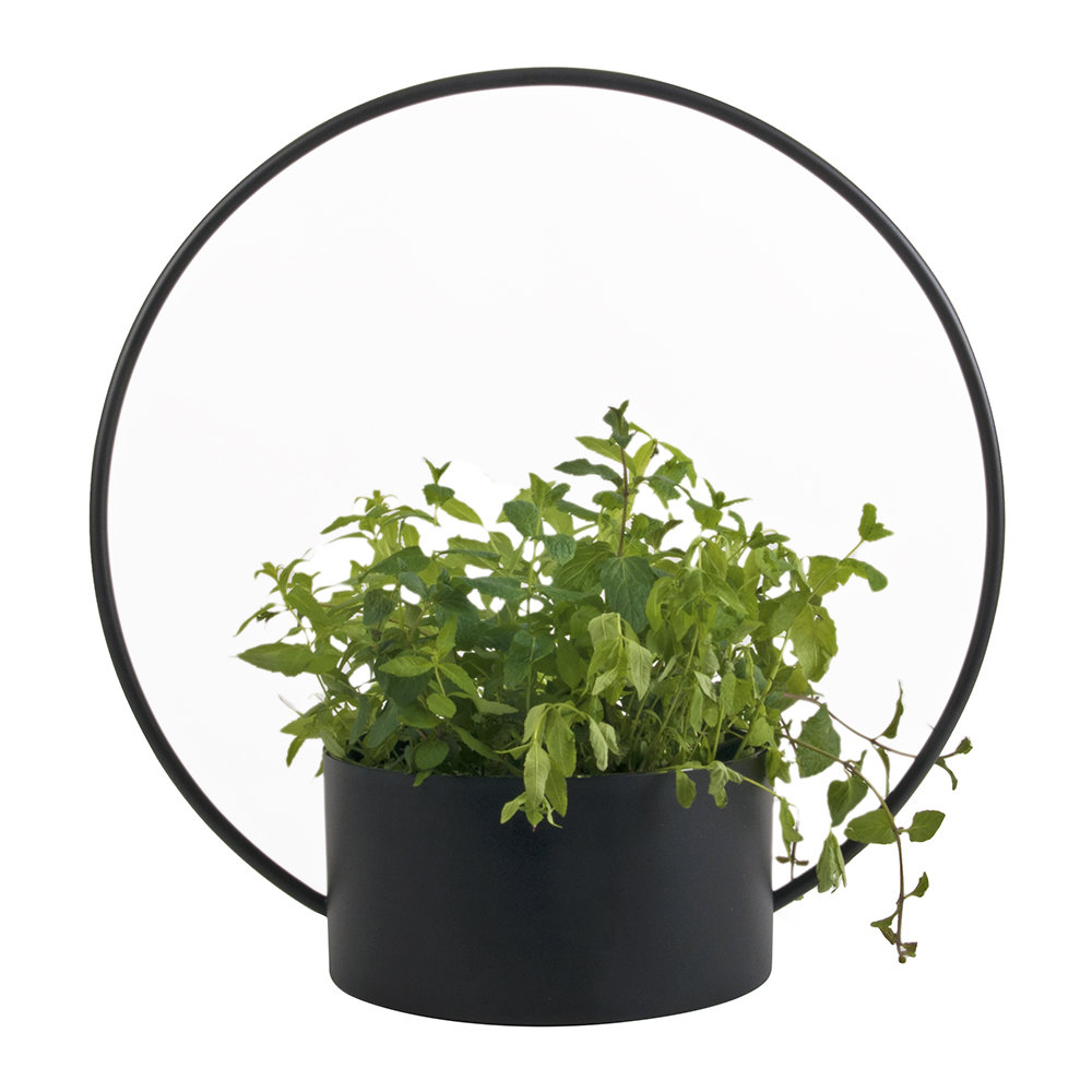XLBoom - O-Collection Planter - Black - Large
