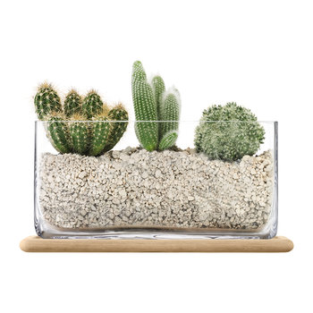 Plant Oblong Glass Pot & Oak Base