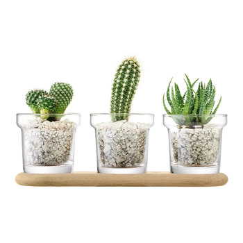 Plant Trio Pot Set & Oak Base