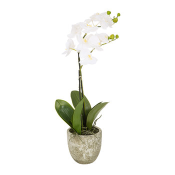 Orchid Spray in Ceramic Pot - White - Small