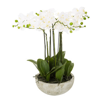 Orchid Spray in Ceramic Pot - White - Medium
