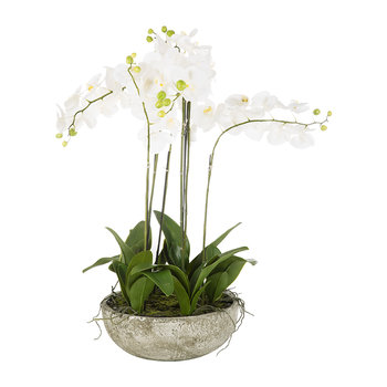 Orchid Spray in Ceramic Pot - White - Large