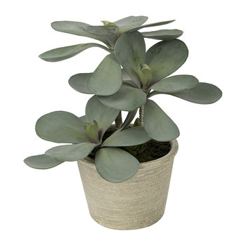 Potted Kalanchoe - Green