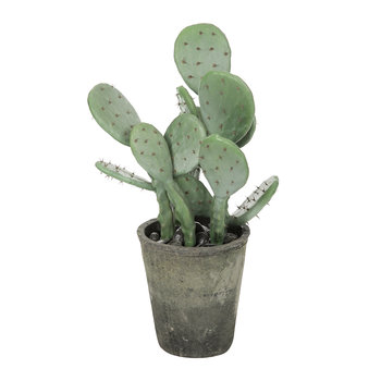 Potted Prickly Pear Cactus