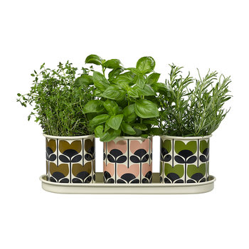 Three Herb Pots with Tray - Climbing Rose