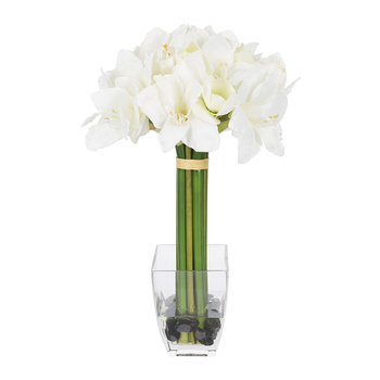 Tall Amaryllis in Vase
