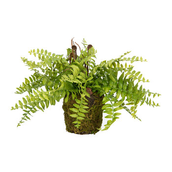 Fern Plant in Soil - Green/Brown