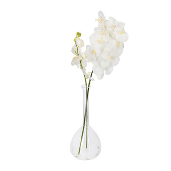 Phalaenopsis Orchid in Round Vase