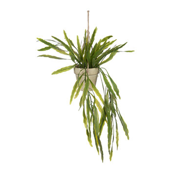 Rhipsalis Hanging Pot - Green