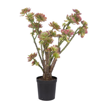 Artificial Succulent Plant - Green - 73cm