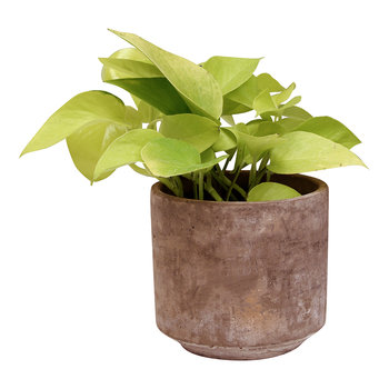 Tivoli Planter - Small - Terra