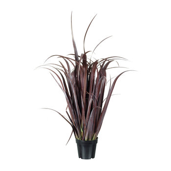 Potted Purple Grass Fountain