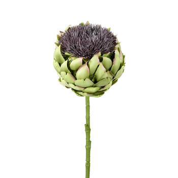 Thistle Stem