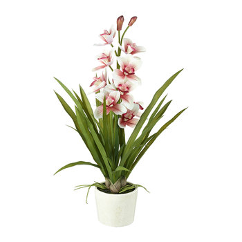 Potted Orchid Cymbidium