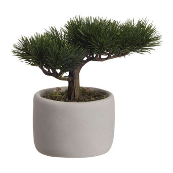 Deko Bonsai Mini Pine Plant