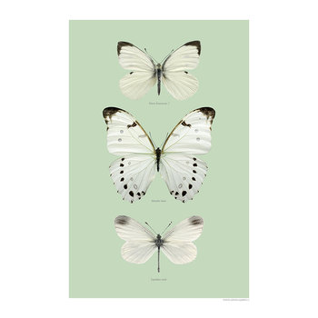 Butterfly Wings Print - White