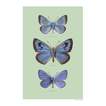 Butterfly Wings Print - Blue