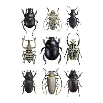 Beetles Print - Black & White