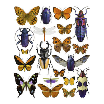 Bugs Print - Purple & Orange