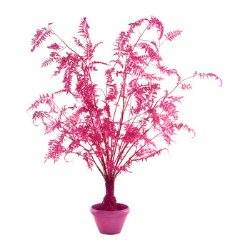 Fern in Pot - Large - Pink