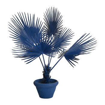 Fan Palm in Pot - Dark Blue