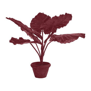 Taro in Pot - Red