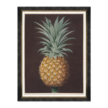 Pineapples of Antigua Framed Print - 60x80cm - The Havannah Pine